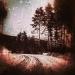 BeyondTheMorninglight_Lifelines